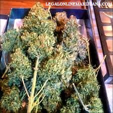420 mail order weed edibles 27100 weed pen buy weed online edibles online buy edibles online ship anywhere buy weed weed for sale 420 buy marijuana online order weed online weed online medical marijuana dispensary mail order weed flower weed candy buy marijuana cannabis candy buy edibles online nyc diesel king kush vape pen cartridge refill marijuana online larry og strain edible candy edible weed candy