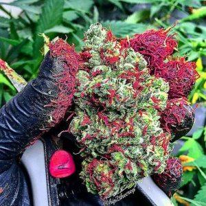buy marijuana oil online-legalonlinecannabisdispensary.com