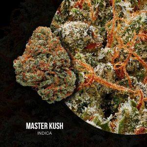 master kush | master kush strain