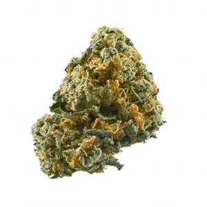 uk cheese strain,head cheese strain,cheese weed strain,la cheese strain,cheese quake strain,sour cheese strain,purple cheese strain,cheese strains,swiss cheese strain,triple cheese strain,best cheese strains,blue cheese strain review,og cheese strain,african cheese strain,lemon cheese strain,royal cheese strain,blueberry cheese strain,cheese candy strain,critical cheese strain,gorilla cheese strain,white cheese strain