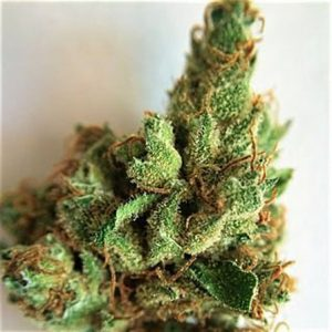 white_rhino_nug_weed_in-hand-legalonlinecannabisdispensary2