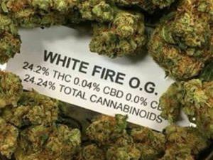 white fire og-legalonlinecannabisidpsnesary.com, buy weed online asia,buy marijuana online asia