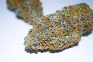 Gelato #41-Gelato #41 review-Legalonlinecannabisdispensary.com-locd