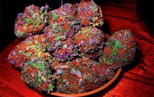 pink starburst strain,straburst strain,starburst og,purple starburst strain