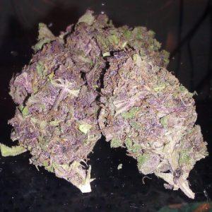 purple kush strain-purple hindu kush-
