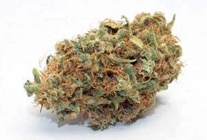 bubblegum kush strain review-Marijuana strain review,