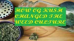 Read more about the article OG Kush changed weed culture. What are the 7 strains that have continued the legacy of the OG Kush weed culture